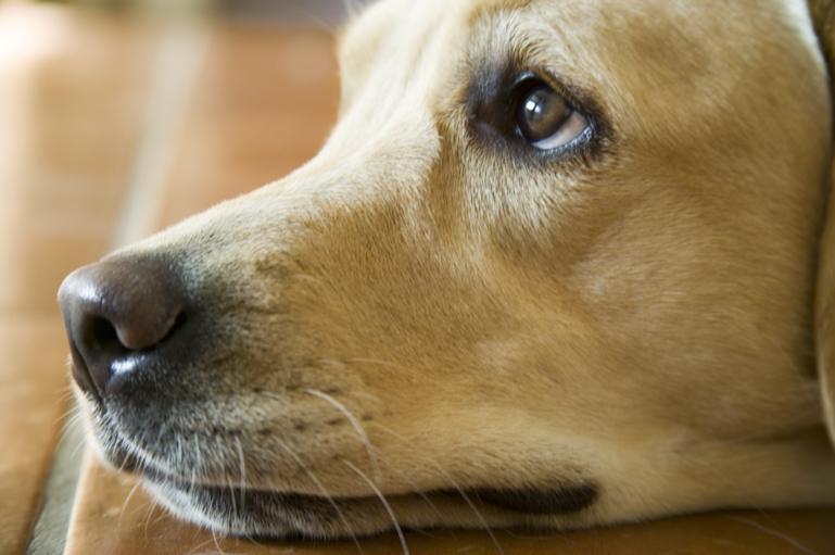 Hvis hunde og katte kunne tale