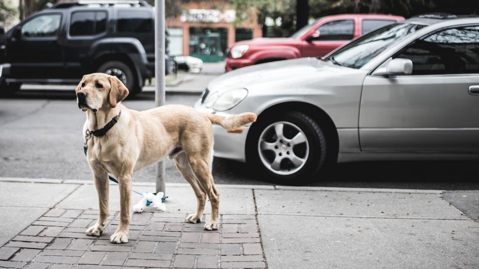Find den rigtige hundesele til din hund